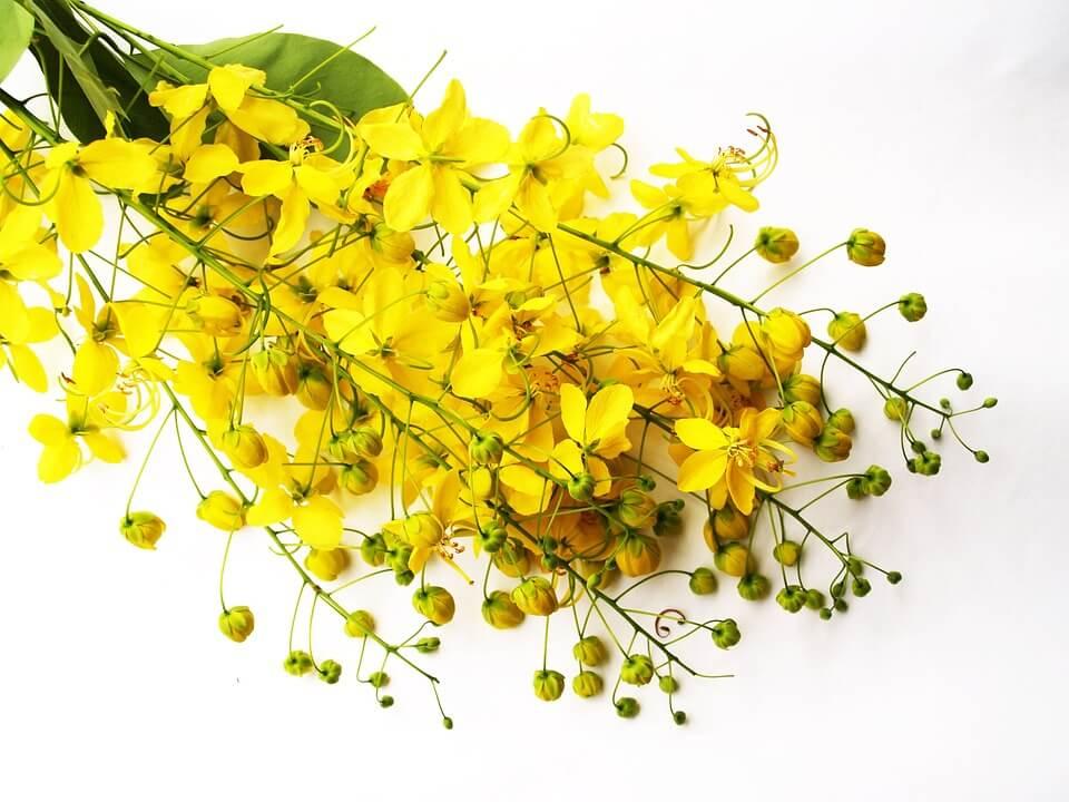 skuteczne zioła na zaparcia